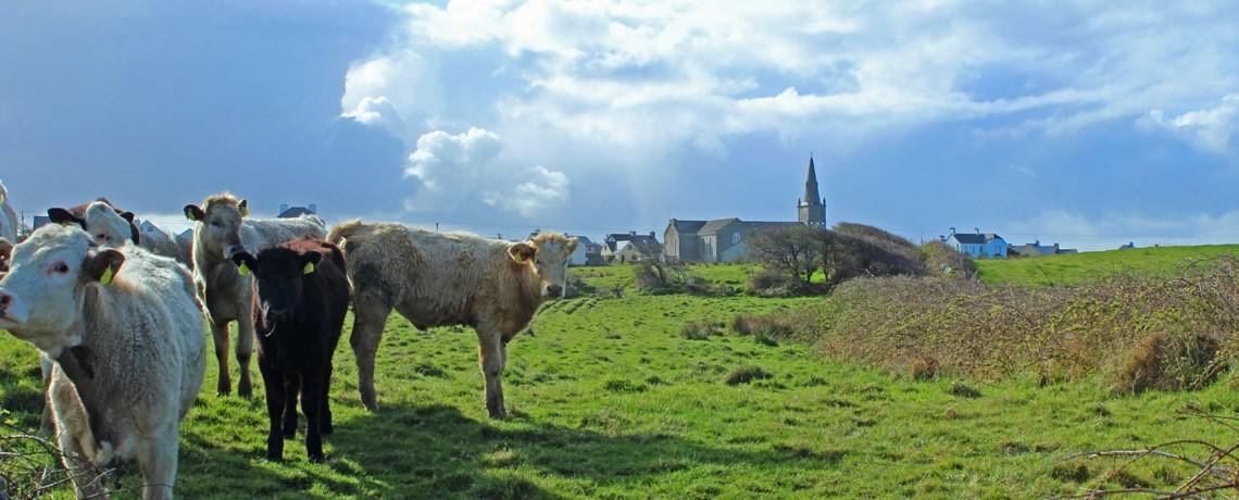 LFI106: Irish Placenames and Townlands.
